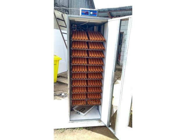Incubatoare oua automate
